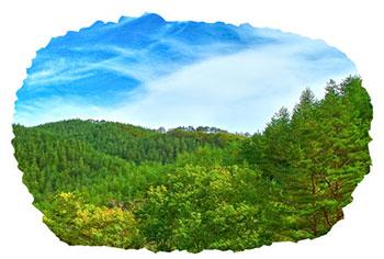 img-tree_woods