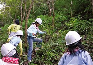 森林の下草刈り活動も実施